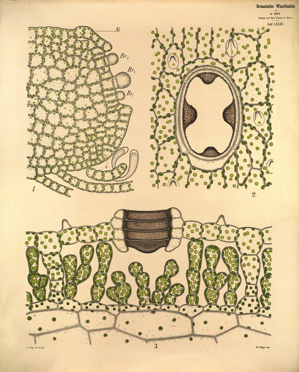 Rare Bites talk #2: Illustrations to micrographs: Visualising patterns in Botany